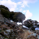 Ikaria's remotest hinterland 05 - trees at trail 2