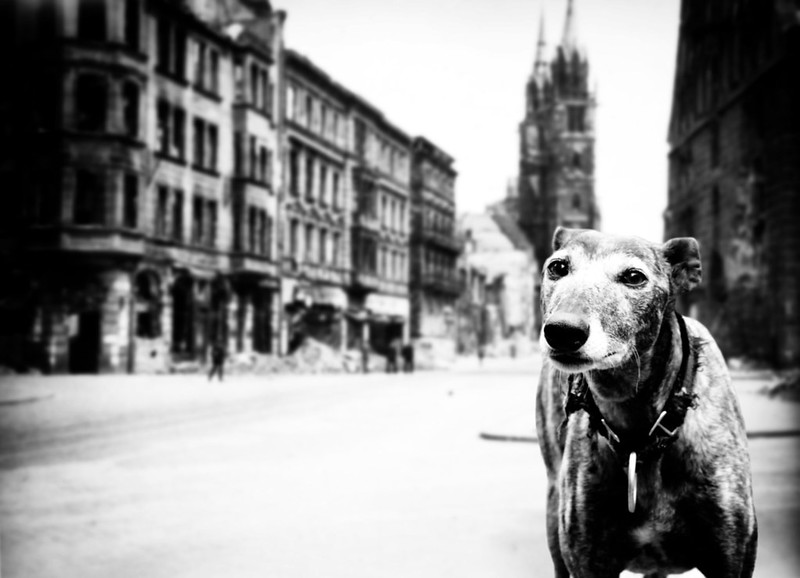 Dog in WWII Europe