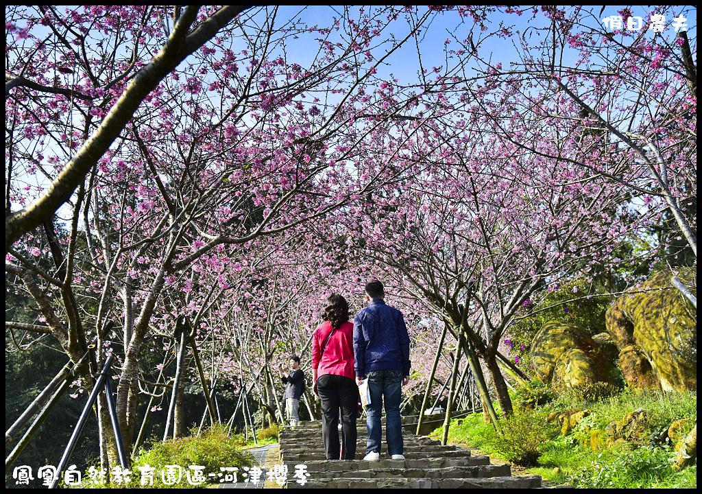 鳳凰自然教育園區-河津櫻季DSC_2355
