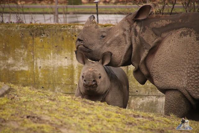 Tierpark Berlin 25.03.2016  0212