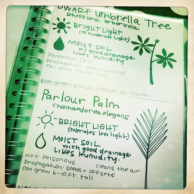 Houseplant Guidebook WIP