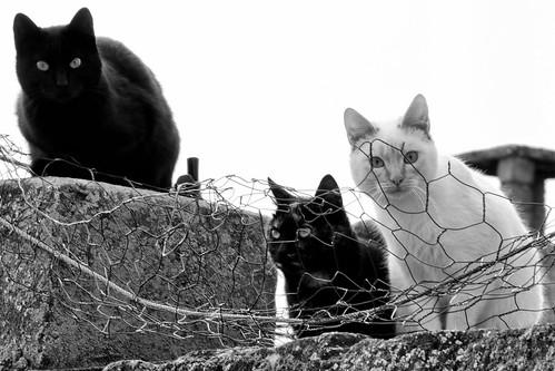 Cuidado, Nos están vigilando!!!
