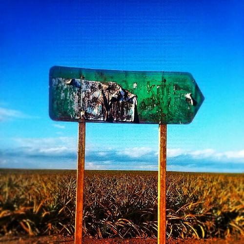 travel lost random farms mobipic uploaded:by=flickstagram kenya365 igafrica igkenya instagram:photo=614451327951235657227669921 instagram:venuename=delmontepineapplefarmland instagram:venue=181670444