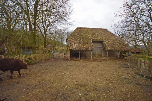 Court Barn and Cattle 2