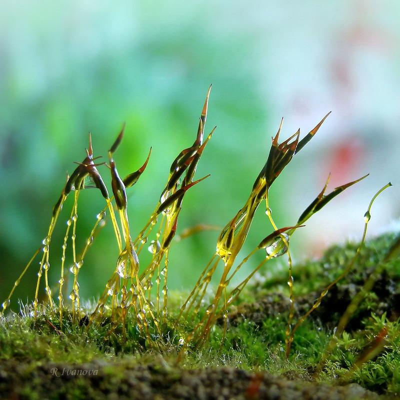 Moss / Мъх