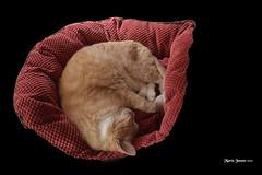 Venus in his cat bed