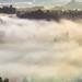Foggy morning by Tom Zedinek