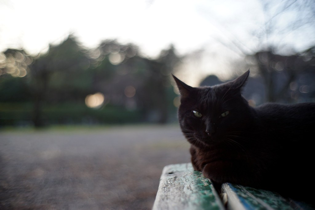 A cat in Mejo park 2016/01 No.1.