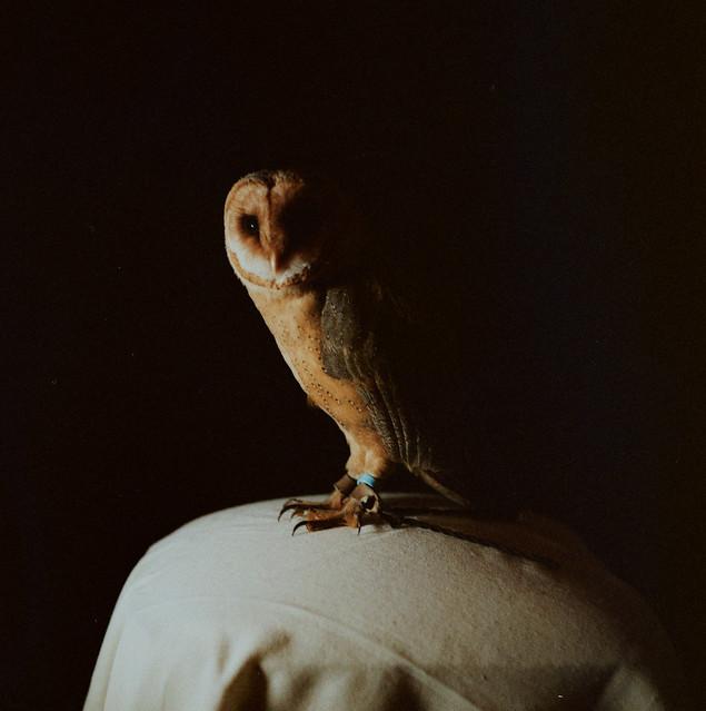 Celeste_Owl