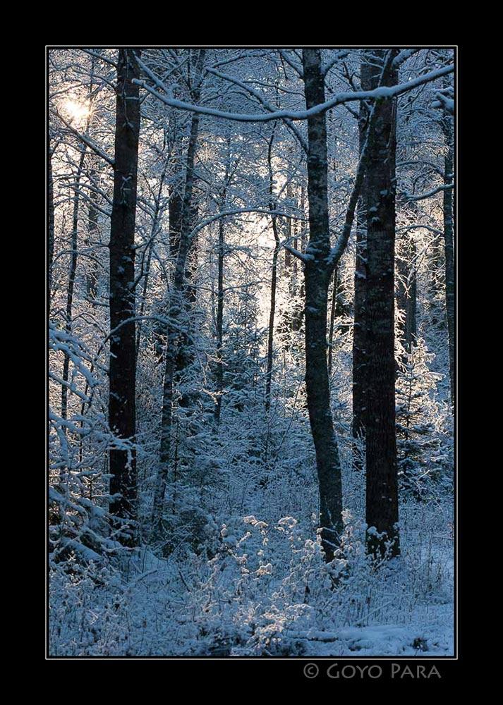 Bosque helado o helado de bosque?