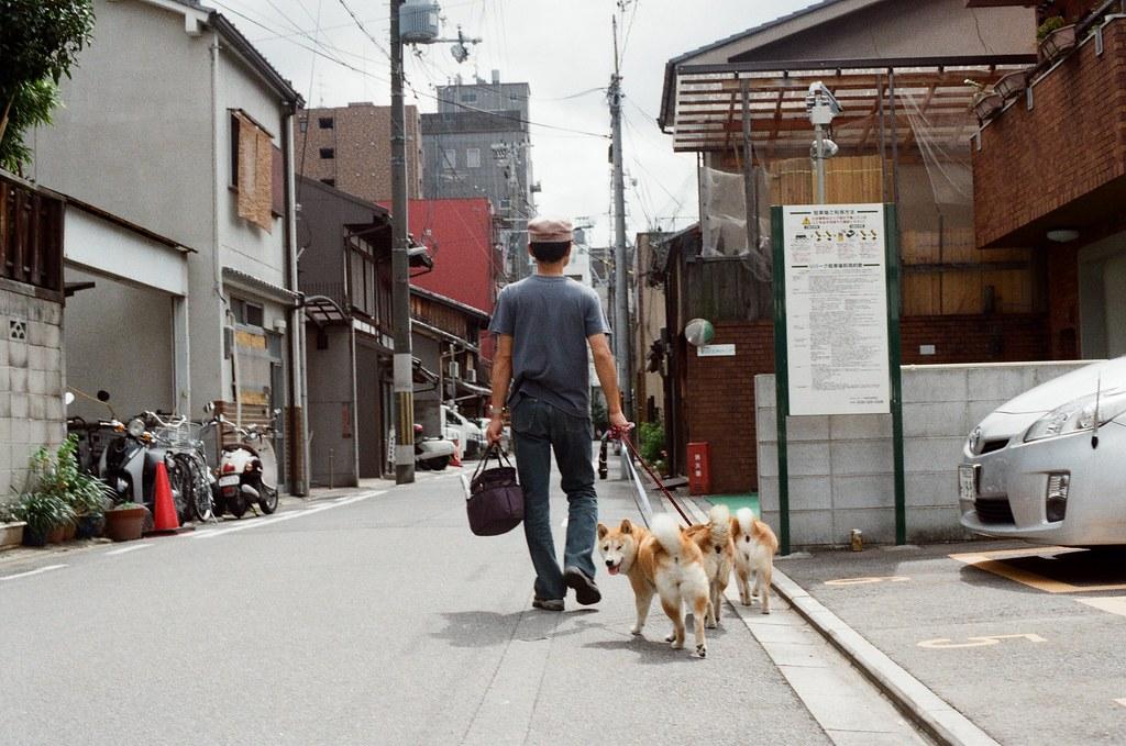 寺町通 京都 Kyoto / Kodak ColorPlus / Nikon FM2 2015/09/27 在寺町通看到一次牽三隻柴犬,我想到前同事很愛柴犬,所以在後面跟拍,拍到其中一張,一隻轉過來看我!  Nikon FM2 Nikon AI Nikkor 50mm f/1.4S Kodak ColorPlus ISO200 0985-0038 Photo by Toomore