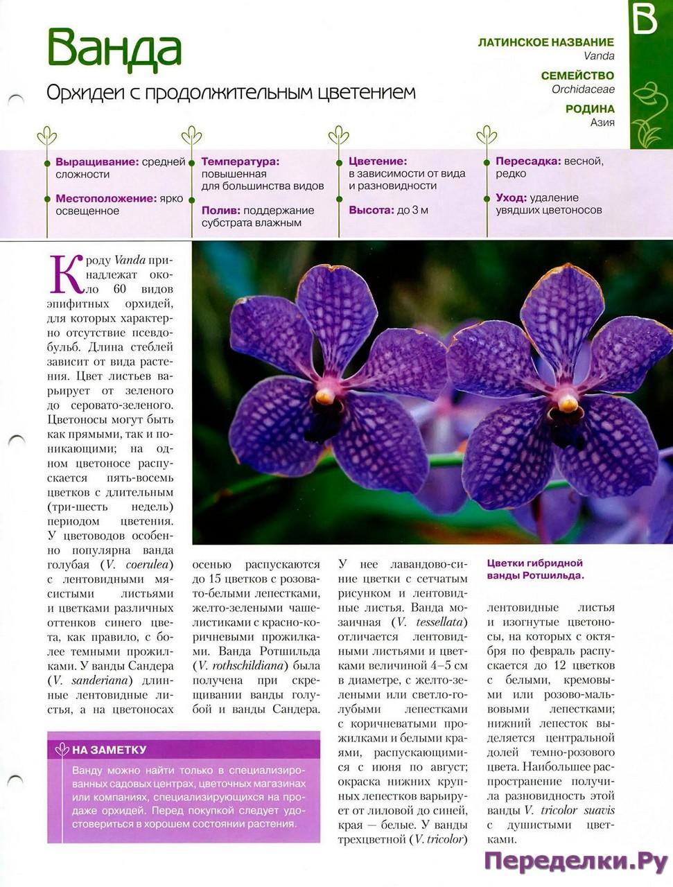 орхидея или фаленопсис - Страница 2 24168666294_d366d0aa72_o