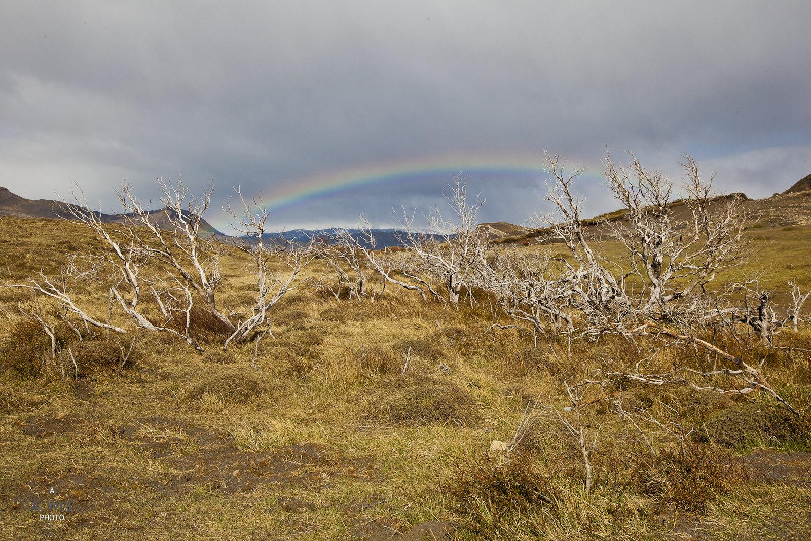Rainbow in the wild
