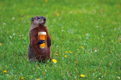 groundhog-field-beer