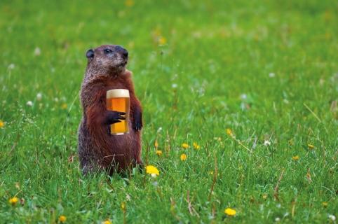 groundhog-field-beer