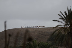 Fuerteventura Oasis-Park