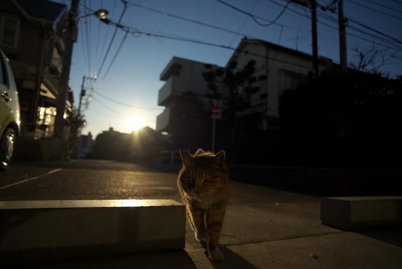 東京路地裏散歩 谷中のネコ 2016年2月10日