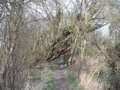 Path near Clavering Farm (IV)