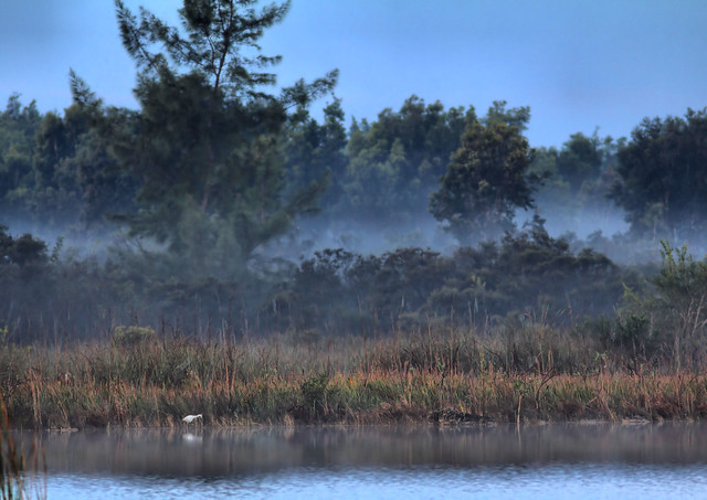 South shore in fog HDR 20160304