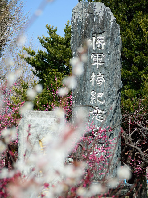 宮ノ陣神社_将軍梅記念碑