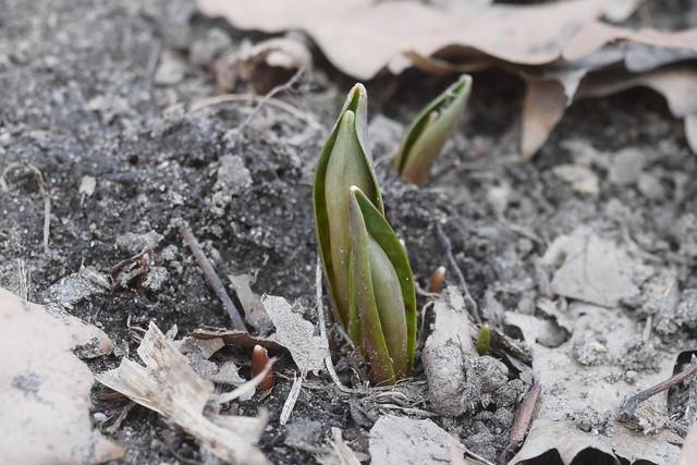 金, 2016-03-11 13:56 - Brooklyn Botanic Garden