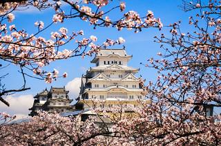 Image of Himeji Castle. flowers sky castle japan spring outdoor 桜 日本 himeji sakura cherryblossoms prefecture himejicastle 春 さくら whiteheroncastle 姫路城 姫路 兵庫 himejijō hyōgo