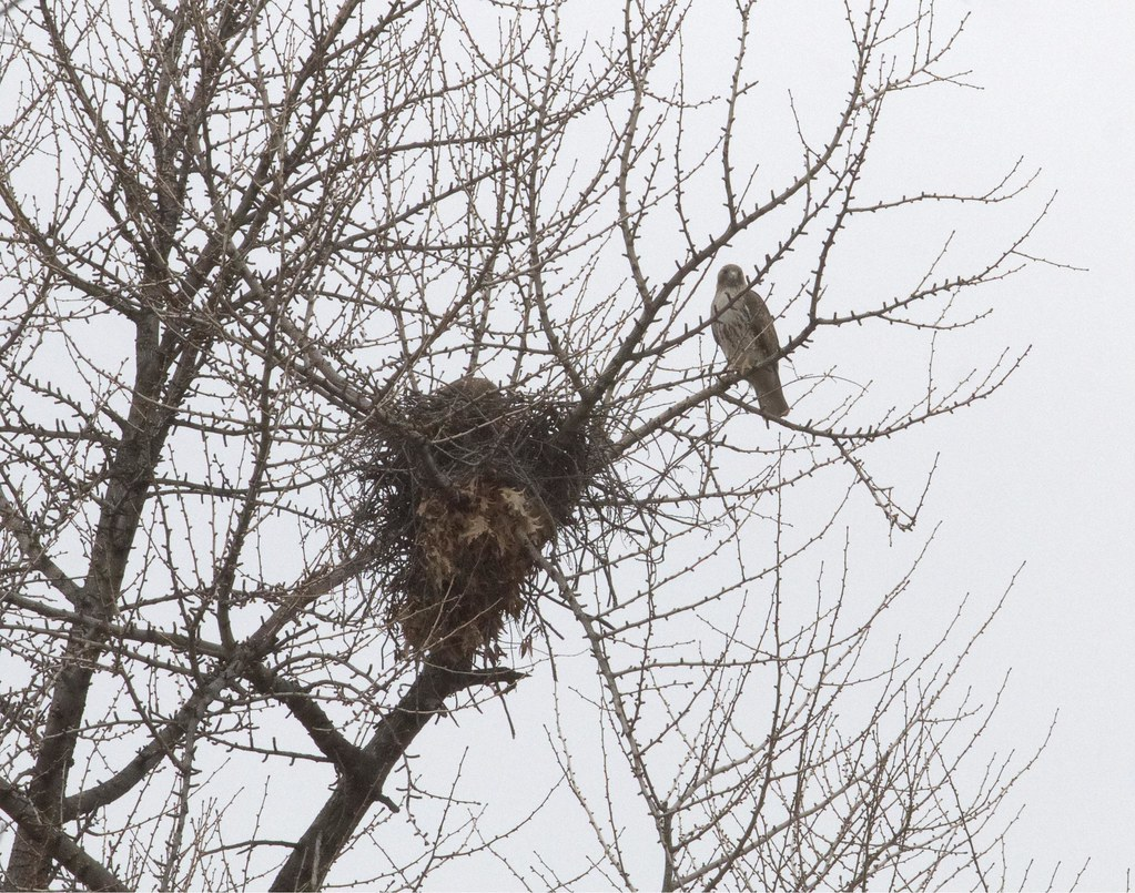 Dora & Christo make final preparations on the nest