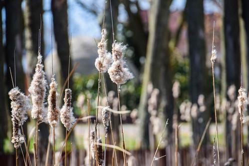 city flower nature se spring sweden sverige cityview trelleborg sprintgtime skånelän