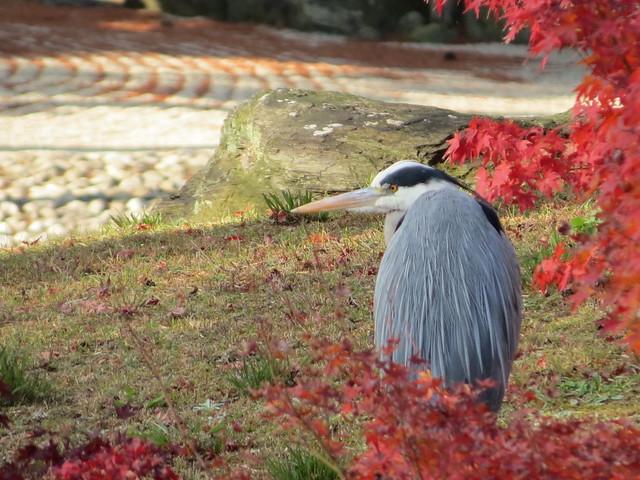 Ritsurin Garden, Takamatsu