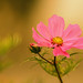 Pink touch! by pat.thom974