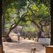 Small photo of Kapil Dhara