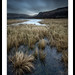 Great Bay marshes  Derwent Water. by Dinky Do's