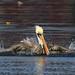 Take a bath. _H262071 by Peacefulbirder