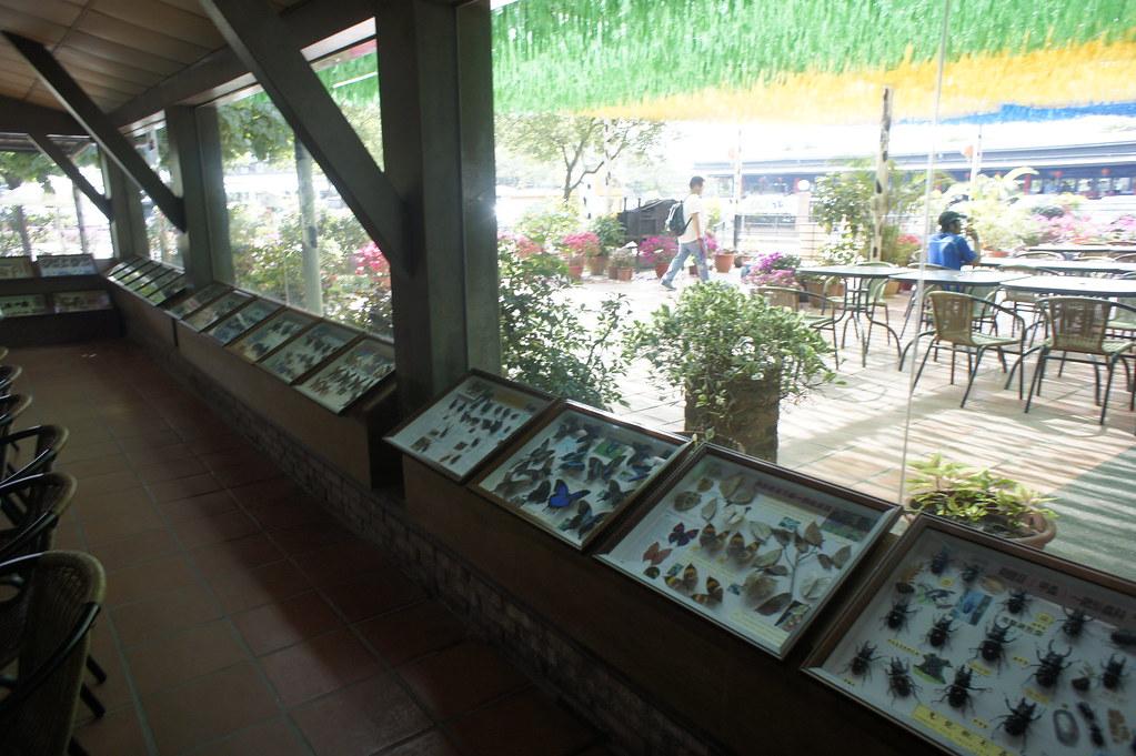台南市柳營乳牛的家 (60)
