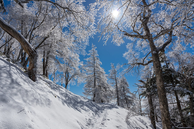 登頂を果たし小雲取山へ向けて下山を始めると日差しが射して霧氷がいっそう鮮やか!