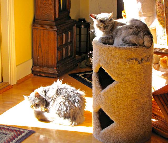 Teddy and Mina