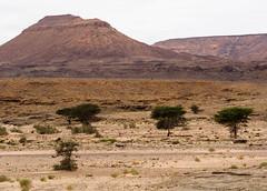 Maroc du sud.Zag à Aouint Ighouman