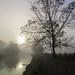 Foggy morning at Kromme Rijn by Anneke van Beek