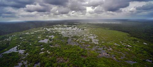 green water rain forest sumatra indonesia rainforest wetlands climatechange biodiversity riausumatra