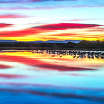 Bosque del apache Workshop_November_2015_Light and Color