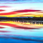 Bosque del apache Workshop_November_2015_Light and Color