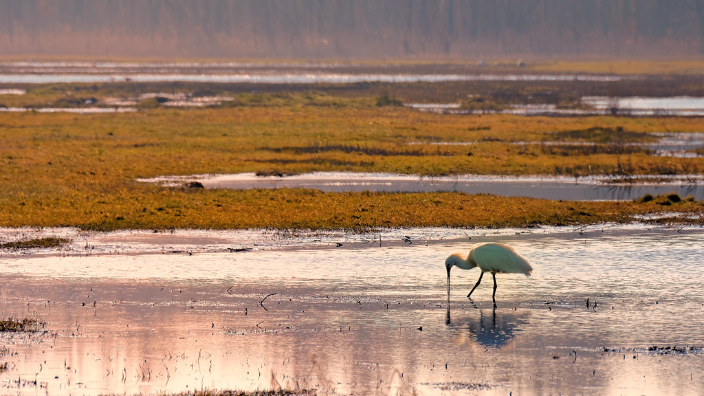 Spoonbill's Sundown Dinner