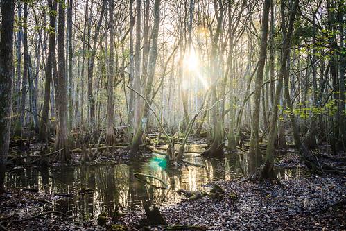 sunrise us unitedstates swamp santaferiver 2015 floridaswamp brycehoover hoovdaddy editjockey december2015 brookerflorida 3clixpix r3v00h3cyr8