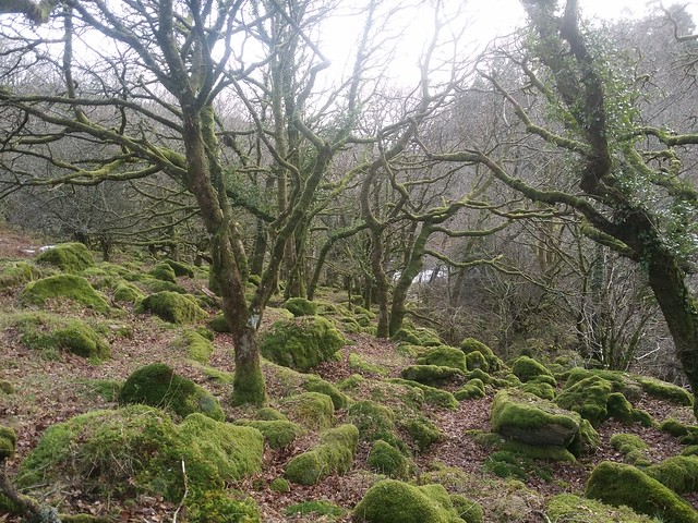 Woodland scene above the East Dart