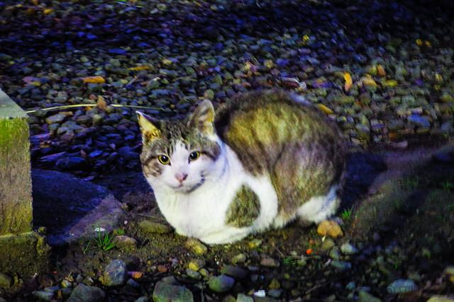 Today's Cat@2016-01-24