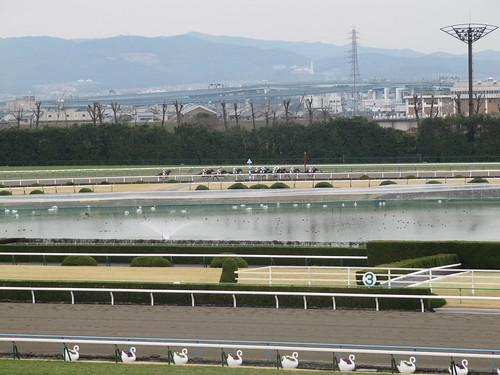 京都競馬場のスワン