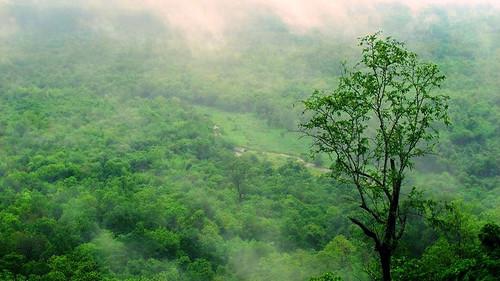ป่าเขตร้อนชื้น