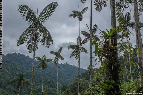 landscape ecuador pedrovicentemaldonado