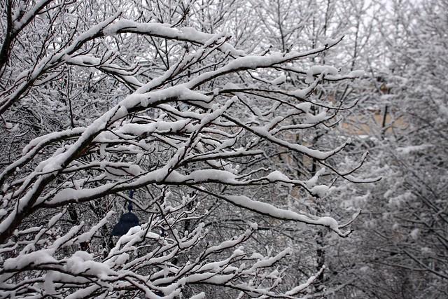 Winter again ... IV