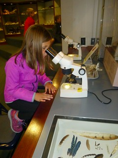 Examining specimines